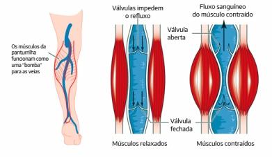 Músculo dor cãibras no da panturrilha após